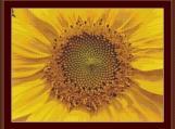 Yellow Flower Cross Stitch Pattern