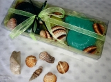 Natural Aegean Sea Shells & Decorative Shell Soaps in a Gift Set