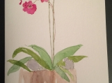 Orchid Plant Hand-painted Watercolor Any Occasion Greeting Card
