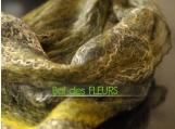 Bumble bee -  felt scarf ,cobweb