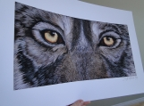 """Rockwood Wolf"" - Giclee on Archival Paper - Limited Edition"