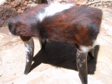 Western Cowhide Horn leg footstool Made In USA 0157