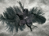 Ostrich feather band