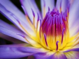 flower shot.